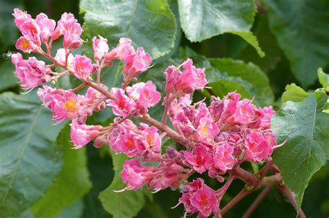 fiori di bah fiori di bach i fiori della gioia e della salute