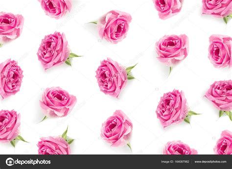 Pink Roses Background Pink Roses Background Stock Photo 169 Antonmatyukha 164087982