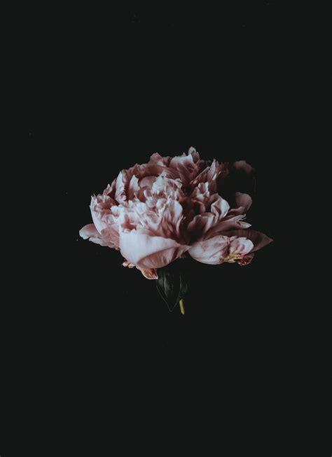 aesthetic black flower wallpapers