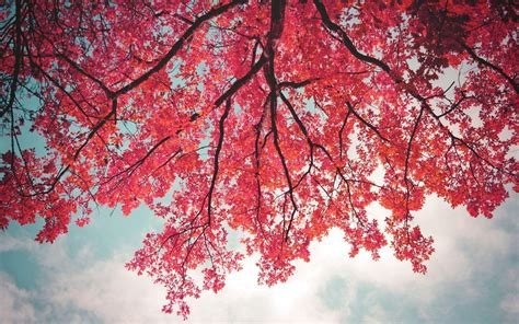 pink trees pink tree wallpapers wallpaper cave