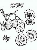 Kiwi Coloring Broccoli Fruit Fruits Printable Orange Colorings Club Recommended Getdrawings Getcolorings sketch template