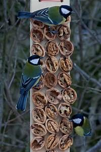 vogelfutterstation mit walnusshalften birds baths With katzennetz balkon mit birds garden fettfutter
