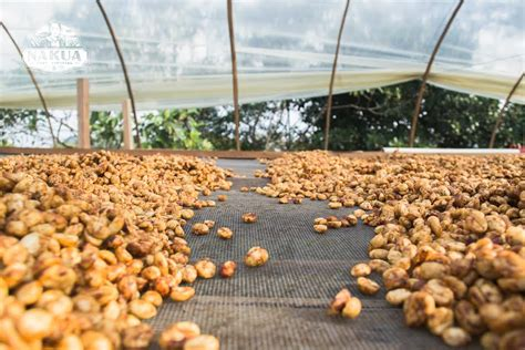 Ever look at your coffee packaging and wonder what its processing terms mean? Natural, Honey and Washed coffee processing - Bean Market