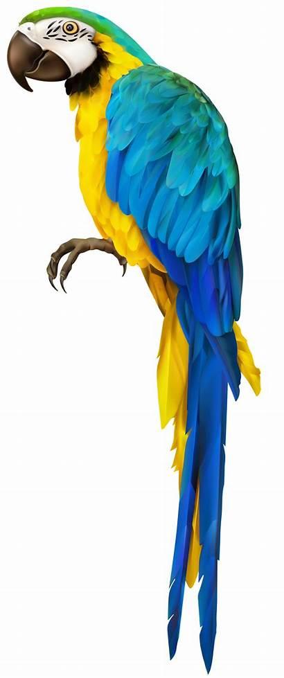 Parrot Transparent Clip Parakeet Clipart Macaw Bird
