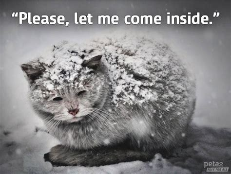 die ears cat visit cold even tips cats