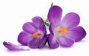 Purple Flowers Wallpapers - Wallpaper Cave