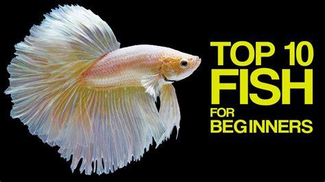 top  aquarium fish  beginners youtube
