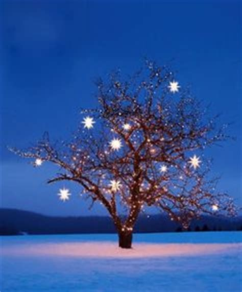 martha stewart christmas tree lights not working 1000 images about moravian star on pinterest stars