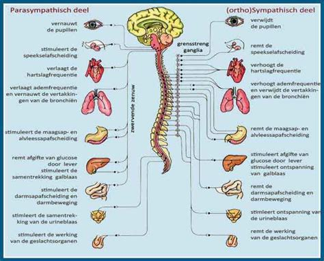symptomen overgang met pil
