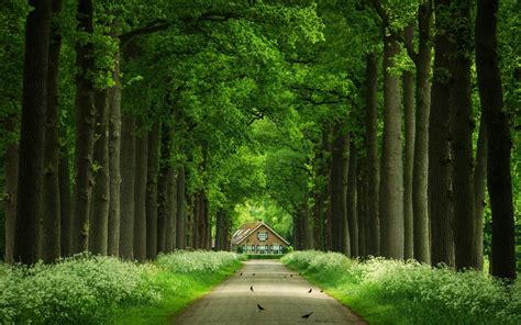 Tree House Way 4k Widescreen Wallpaper  Hd Wallpapers