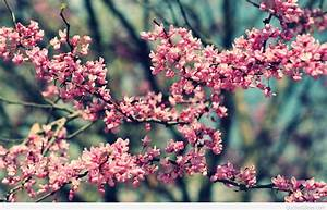 Awesome Hello Spring photo