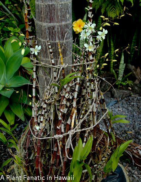 Plant Fanatic Hawaii The Hot Loud Proud