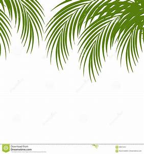 Palm Leaf Silhouettes Background. Tropical Leaves. Stock ...