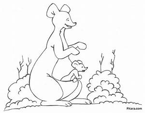Free coloring pages of joey kangaroo
