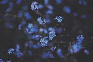 blue, flowers, photography, tumblr, wallpapers - image ...
