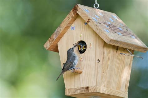 attract birds  shelter    backyard