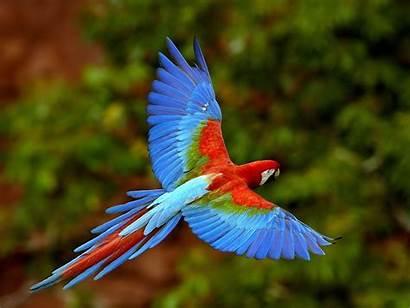 Parrot Wallpapers Parrots Birds Macaw Bird Animals