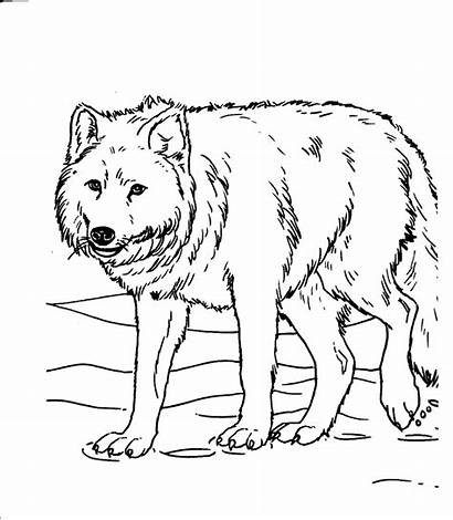 Coloring Realistic Animal Pages Printable