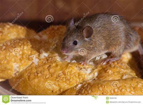 souris dans la cuisine photo libre de droits image 23284765