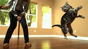 Awesome Cats In Slow Motion  1 500fps