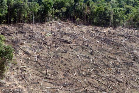 clear cutting   amazon rainforest  viewed