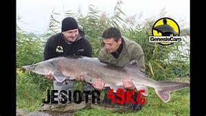 Najwi U0119ksze Jesiotry W Polsce - 39 I 49kg