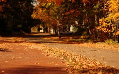 wallpaper folliage yellow tree autumn city street