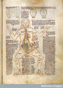 Anatomy Of Pregnant Woman Labelled With Ailments And The