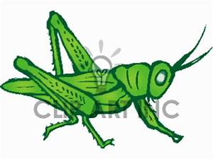 19 grasshopper clip art images | Clipart Panda - Free ...