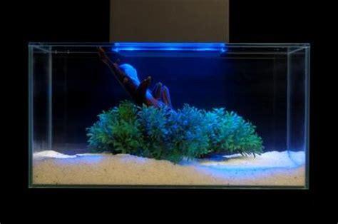 black light aquarium review fluval edge 6 gallon aquarium with 21 led light