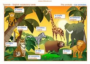 Vocabulario español inglés: los animales, the animals , Vocabulario español inglés, tarjetas