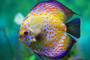 Top 12 Most Beautiful Fish in the World - EnkiVillage