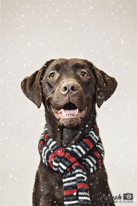 toronto holiday pet mini sessions pawsh magazine