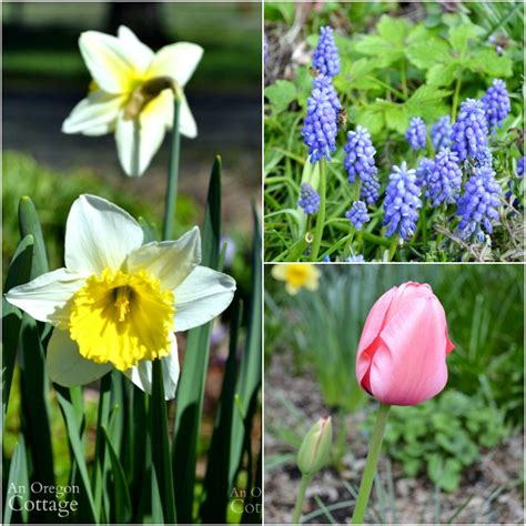 flowers that bloom every year 11 easy plants for all year long interest which don t require a green thumb garden pics and tips