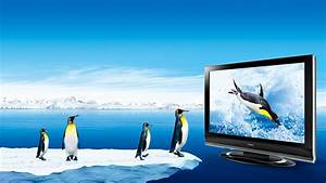 3D penguin and LED TV true colors wallpaper