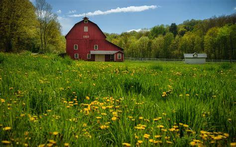 Cartoon summer gardening floral landscape scene. Dandelions barn trees meadow wallpaper | 1920x1200 | 97524 ...
