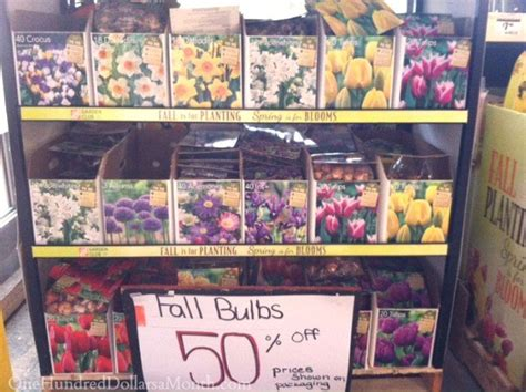 bulbs 50 at the home depot one hundred