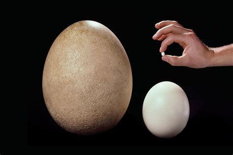 The Champion Egg-layers Of The Bird World