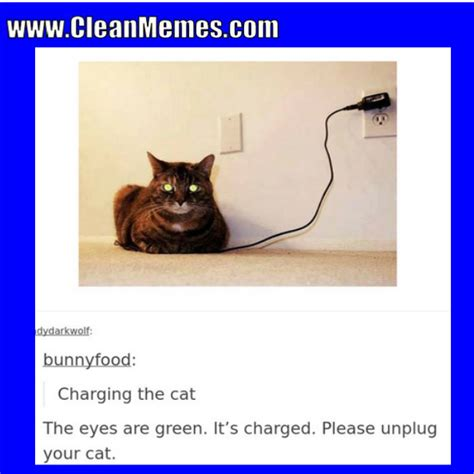 Funny Cat Memes Clean - clean memes 10 24 2017 clean memes the best the most online