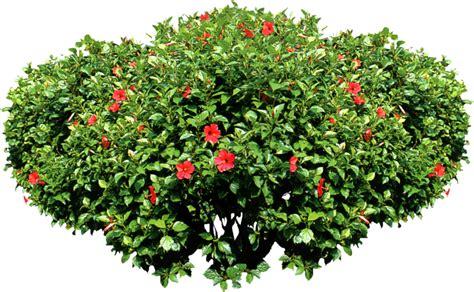 shrub image public domain textures public domain free textures public domain images shrub