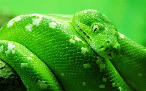 Serpiente Color Verde Hd 1920x1200 Imagenes Wallpapers