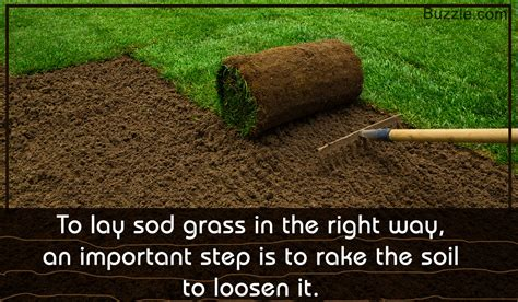 when to lay sod a beginner s guide on how to lay sod grass properly