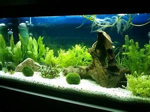 Liter Aquarium Berechnen : 180 liter s damerika anf ngerbecken aquarium forum ~ Themetempest.com Abrechnung