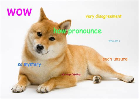 Doge Meme Shiba - the shiba inu went viral online what happened to the breed in real life