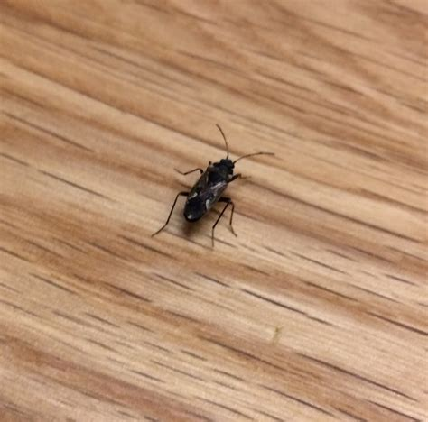 Insekten Im Haus Erkennen by Wanzen Im Haus Wanzen Am Im Haus K Ndigungsgrund Kaefer