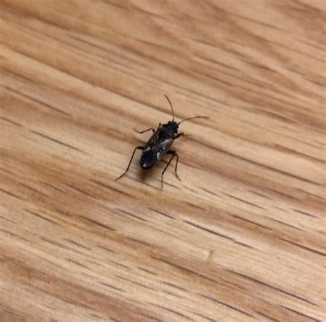 Ungeziefer Im Haus! Was Kann Das Sein? (insekten