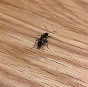 Schädlinge Im Haus : ungeziefer im haus was kann das sein insekten ~ Lizthompson.info Haus und Dekorationen