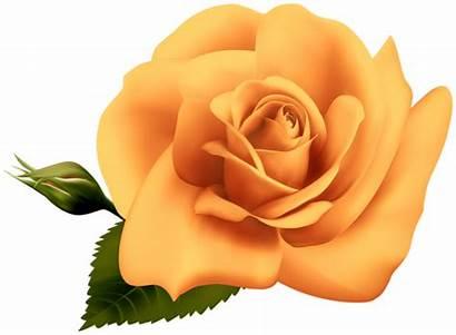 Rose Orange Clipart Transparent Yellow Roses Yopriceville