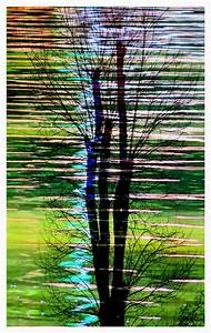 Baum Am Wasser : der baum am wasser foto bild landschaft fotomontage ~ A.2002-acura-tl-radio.info Haus und Dekorationen