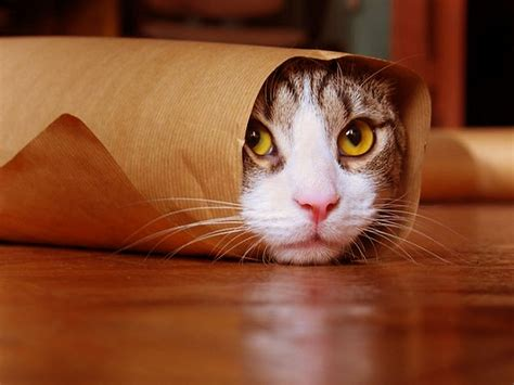 Funny Cat Wallpapers Pictures Images